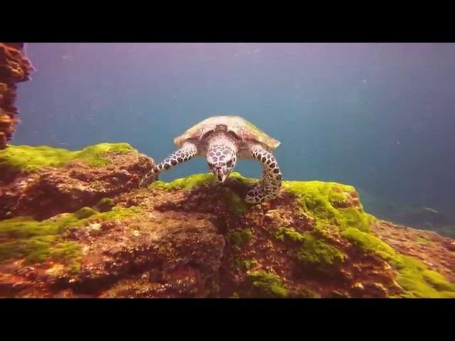 Koh Lanta - Scuba Diving