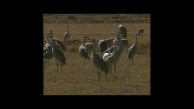 Birds of the Bosque
