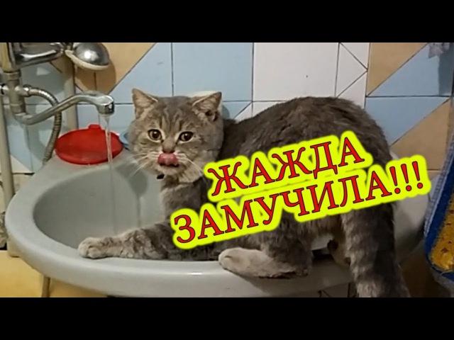 Жажда замучила / Thirst tortured