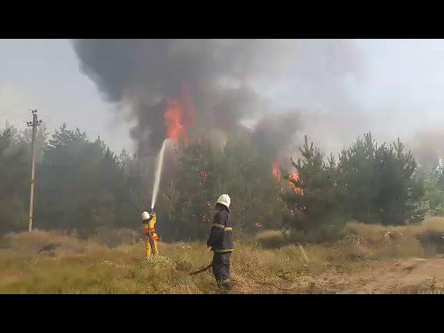 Гасіння пожежі поблизу м. Павлоград (урочище Павлоградські Піски) у Дніпропетро ...