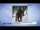 У Карпатах депутат зі своїм батьком-лісником вбили рідкісну рись