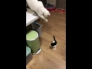 Кошка играет с котёнком VIDEO ВАРЕНЬЕ