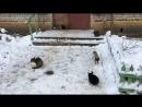 Кошкин дом 😸😸😸😸😸😸