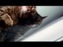 Знаменитая реклама мерседеса со скользящим котом