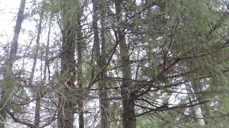 Встреча в лесу с синицами-птицами28.11.17г.