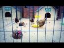 Муром Птичий двор при монастыре