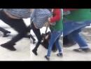 Мигранты задирали юбки покупательницам