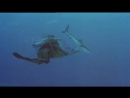 BBC «10 самых опасных акул» (1 часть) (Документальный, природа, животные, 2001)