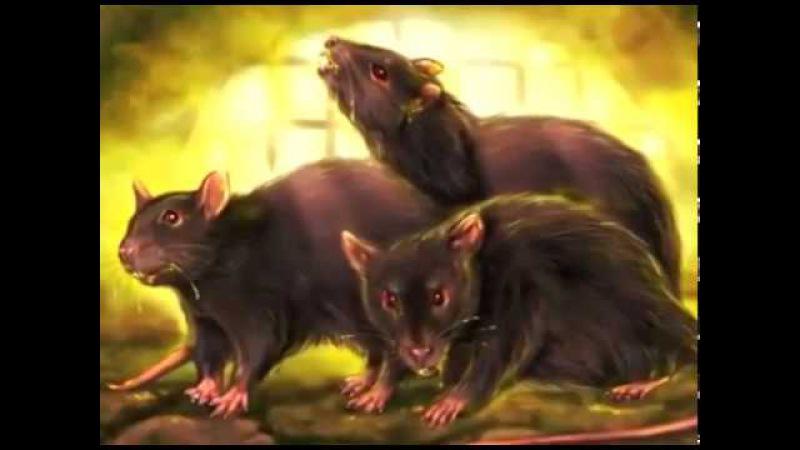 Крысиный король технология извращения сознания