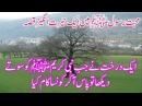 ایک درخت نے جب نبی کریمﷺکو سوتے دیکھا تو پاس