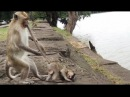 OH! My God! Why He Do Like This With Small Baby Monkey?, Monkeys 1075 Tube BBC