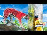Teach Colour for kids baby songs learn color with Bad Tiger Nursery Rhyme Children video