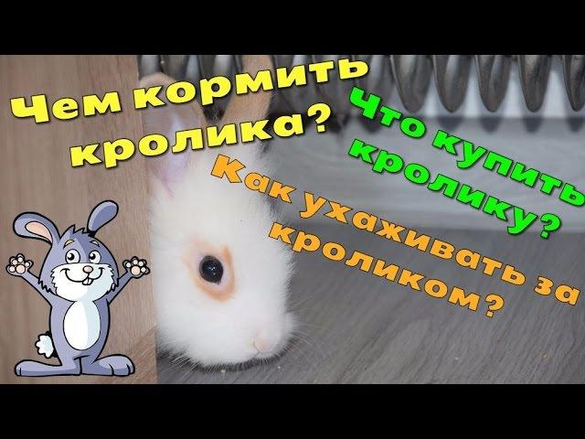 Чем кормить кролика, что купить кролику, как ухаживать за декоративными кроликами
