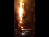 25.01.18 в 20:40 Алкашня на Севастопольской 18 подожгла как минимум 3 пальмы.