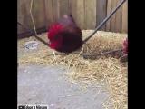 Животные радуются жизни