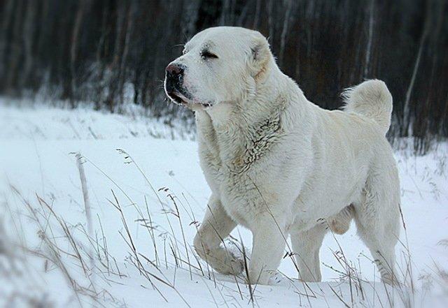 Собака напала на женщину в Томском районе