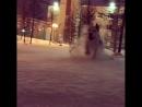 Снежные игры. Собака счастлива!