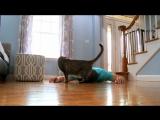 Что сделал мой кот, когда я притворился мертвым