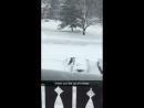 Отчаянная борьба со снегом
