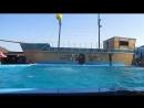 Дельфинарий в Архипке. 2017 год. Забавные выступления дельфинов