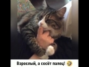 Кот сосёт палец
