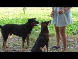 Lovely amazing girl playing with groups of baby cute dog - funny cute dog part 09