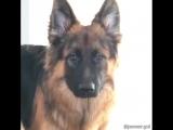 Братья наши меньшие. Вот почему собаки это самые прекрасные животные на планете