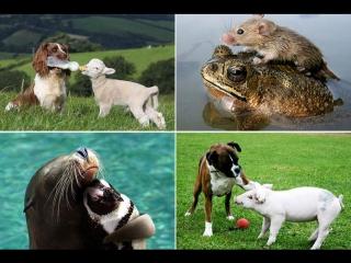 Дружба и взаимопомощь среди животных