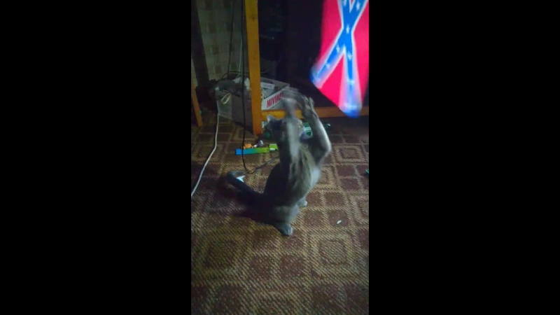 кошатины и флаг 1часть