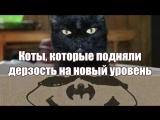 Коты, которые подняли дерзость на новый уровень