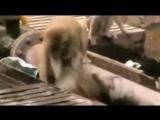 شاهد أروع فيديو «الرحمة مابين المخلوقات الغير آدمية».. فرجة ممتعة