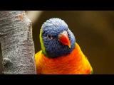 Пение птиц звуки леса Sounds of nature Relax