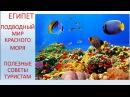 Египет. Подводный мир Красного моря. Советы туристам