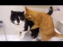 Смешные Коты и Кошки. Где моя сосиска.