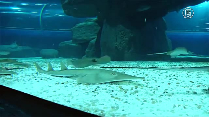 Рио - крупнейший аквариум Латинской Америки