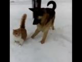 Кот и пес играют на снегу