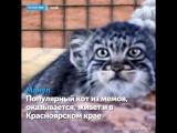 Редкие животные Красноярского края