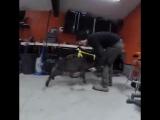 Необычная атака козла