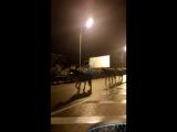 В Сочи на дорогах участились случаи встречи беспризорных животных — коров и лошадей.
