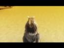 Pikku-Orava - Maalaispoika oona