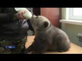 В уфимском вольере впервые показали четверых новорожденных медвежат