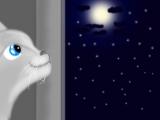 Футаж. Кот и ночь