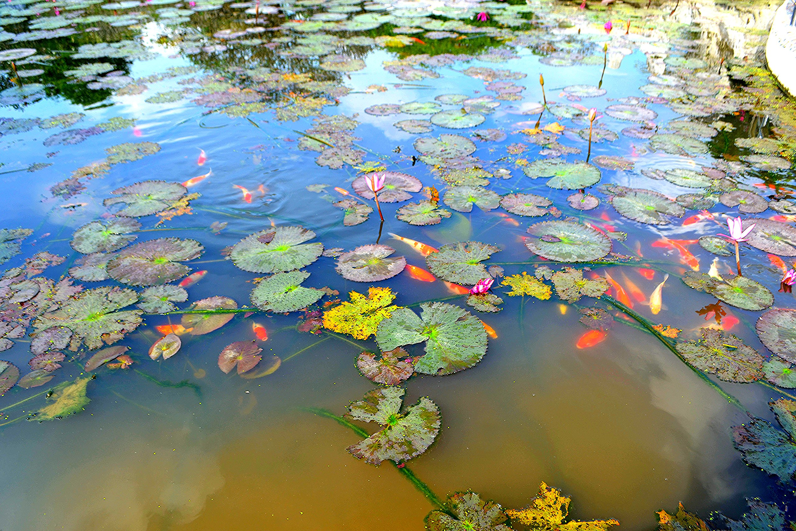 Елена Руденко ( Валтея ). Таиланд. Парк миллионолетних камней и крокодиловая ферма. 8PmfYxnKK14