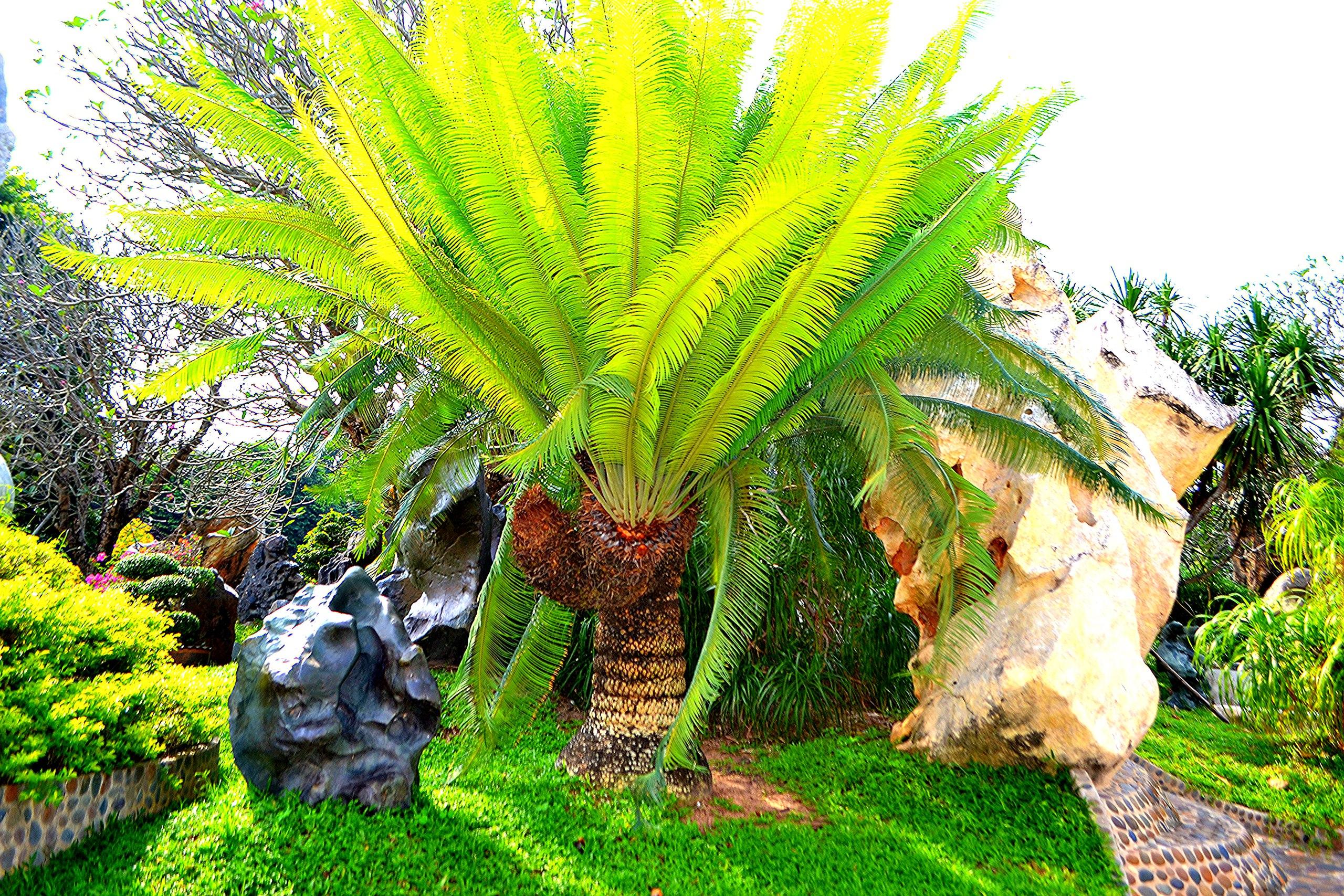 Елена Руденко ( Валтея ). Таиланд. Парк миллионолетних камней и крокодиловая ферма. VlgUnTksEfQ