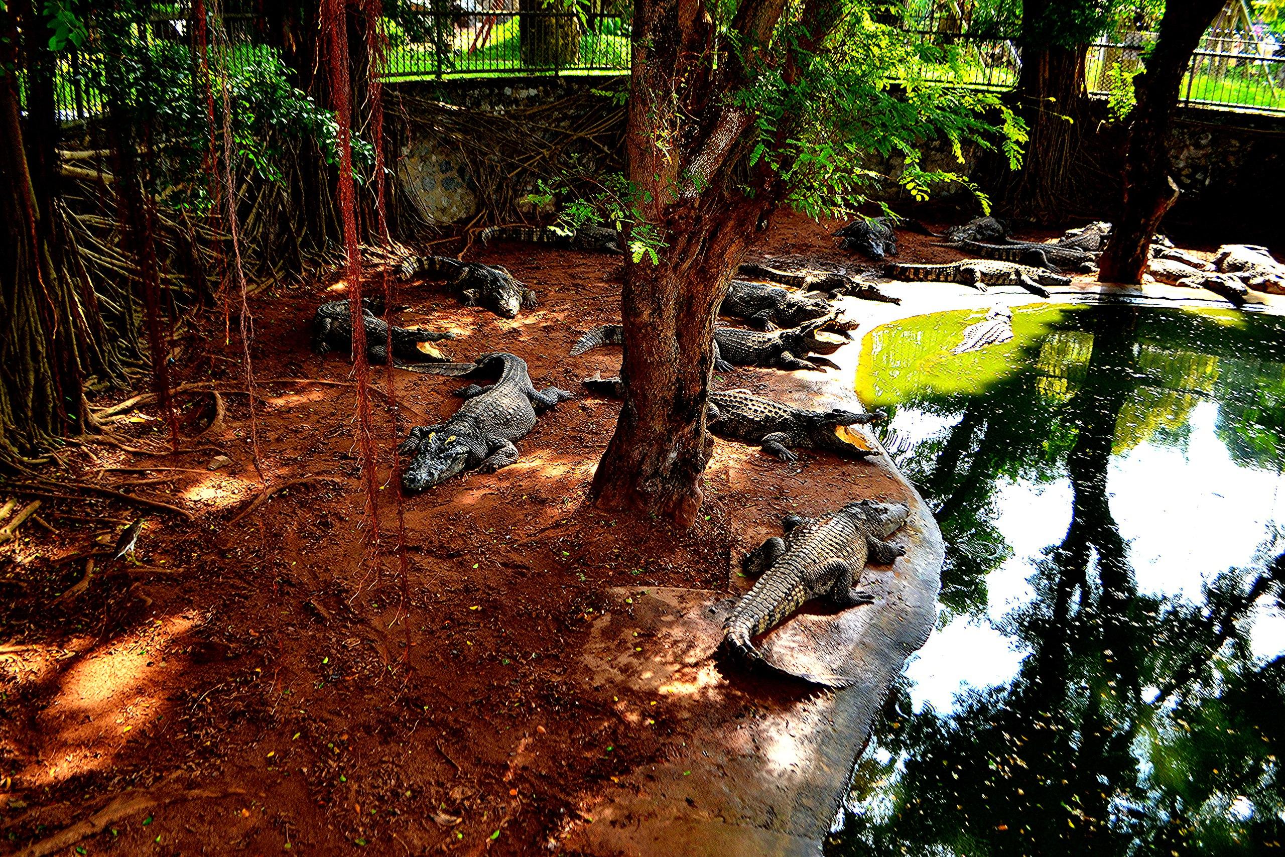 Елена Руденко ( Валтея ). Таиланд. Парк миллионолетних камней и крокодиловая ферма. AJ9TkUHE2YE