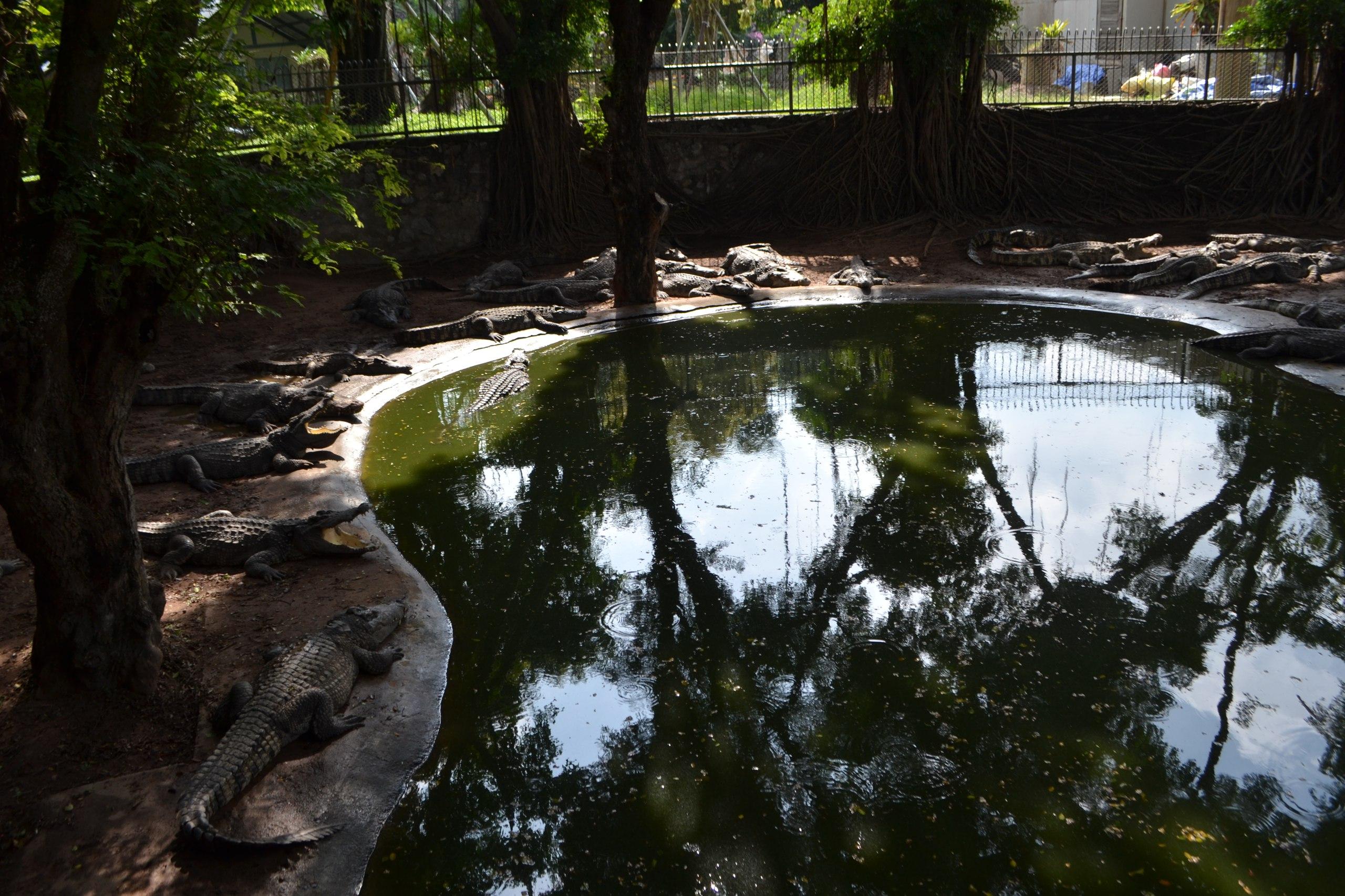 Елена Руденко ( Валтея ). Таиланд. Парк миллионолетних камней и крокодиловая ферма. QFMRxVpIrYI
