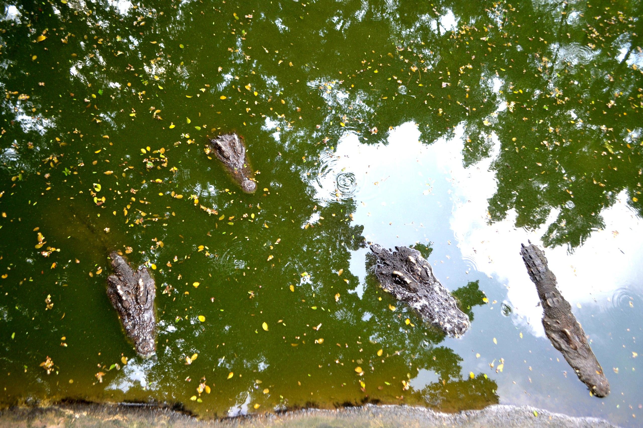 Елена Руденко ( Валтея ). Таиланд. Парк миллионолетних камней и крокодиловая ферма. WGpTs9eXvcQ