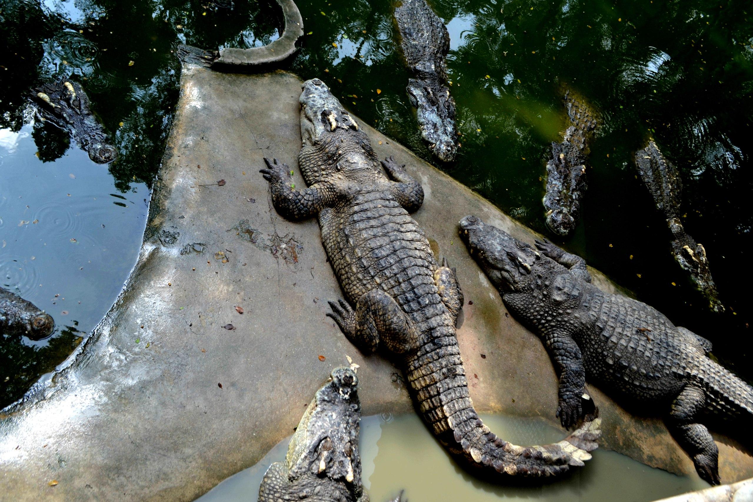 Елена Руденко ( Валтея ). Таиланд. Парк миллионолетних камней и крокодиловая ферма. B6gLk-i7GiQ