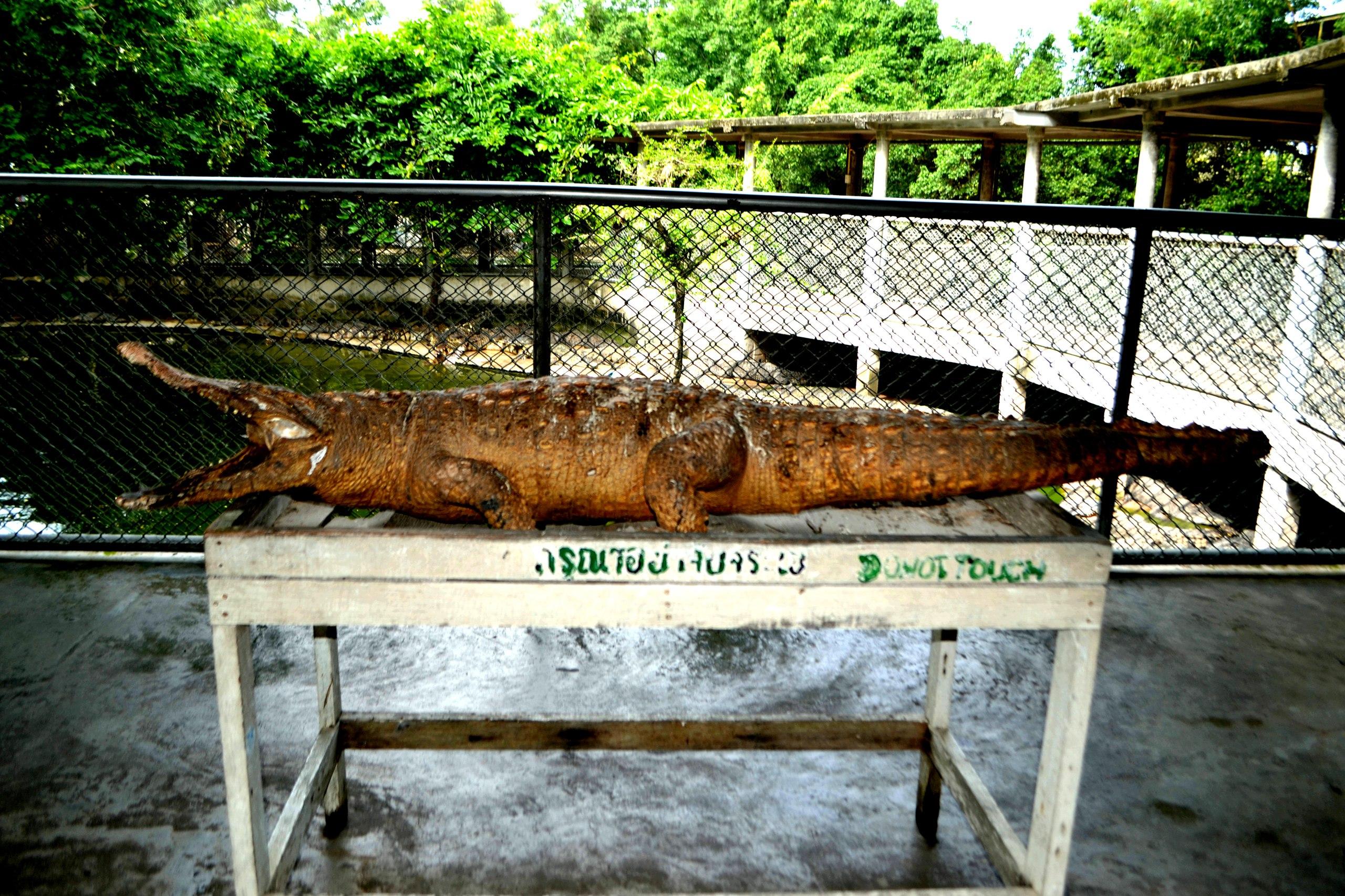 Елена Руденко ( Валтея ). Таиланд. Парк миллионолетних камней и крокодиловая ферма. N4PCOHK44cw