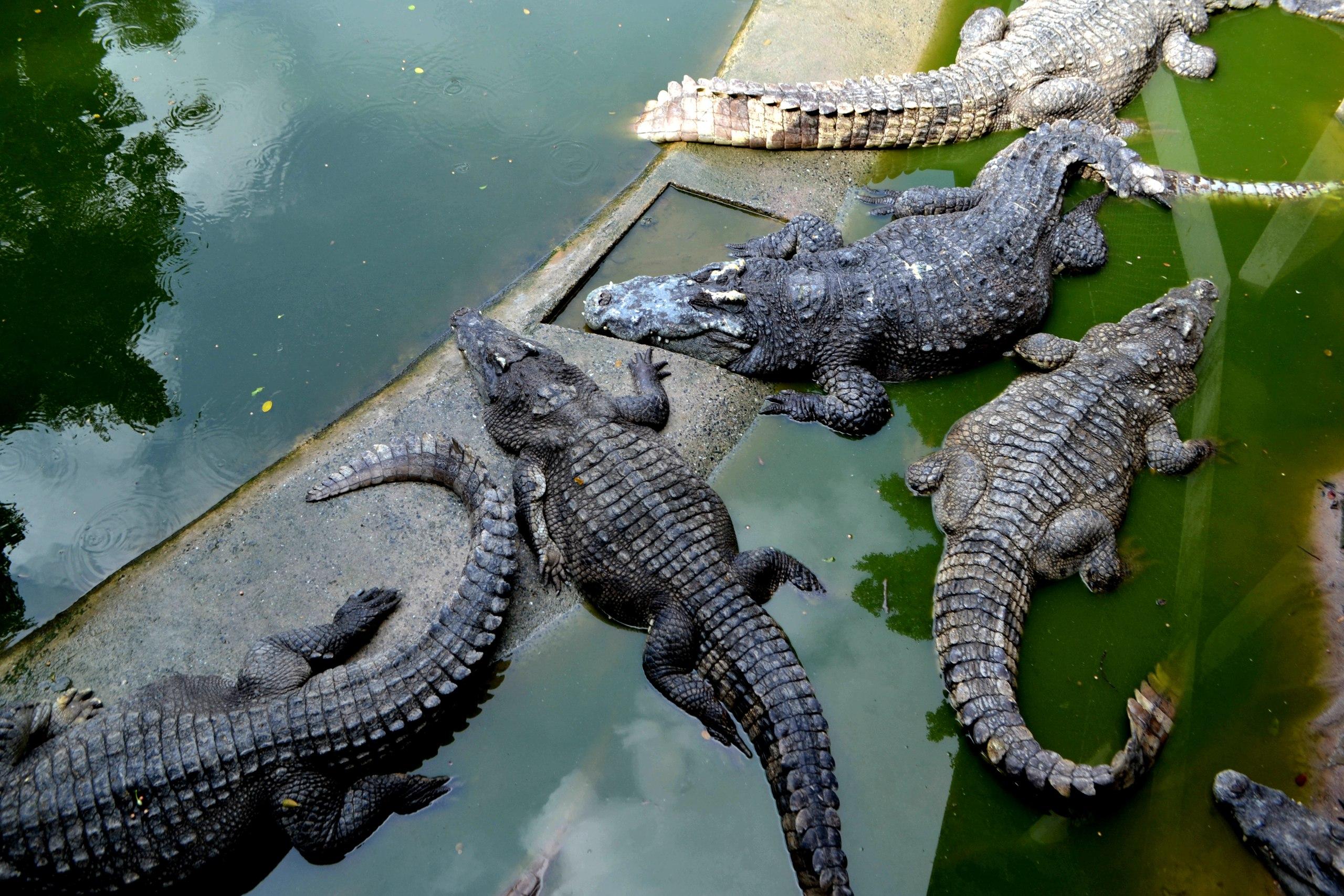 Елена Руденко ( Валтея ). Таиланд. Парк миллионолетних камней и крокодиловая ферма. CQ72UCWpcQU